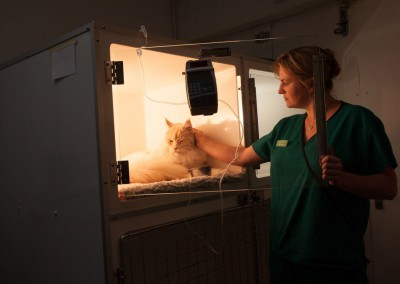 Vet Photography-_MG_0952